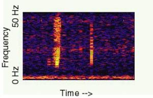 A spectogram of the Bloop. Or a Predator-eye view of 9/11, I'm not sure.